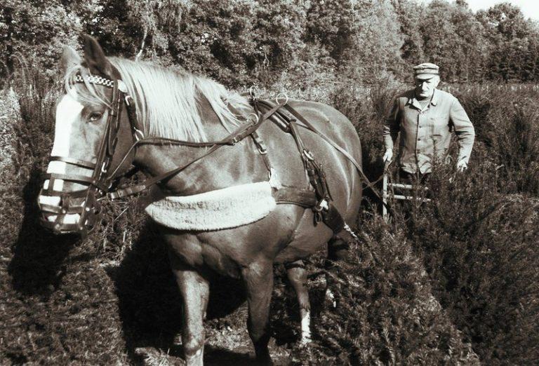 Pferdegespann bei der Arbeit
