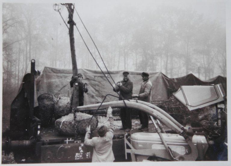 Baumverladung 1958