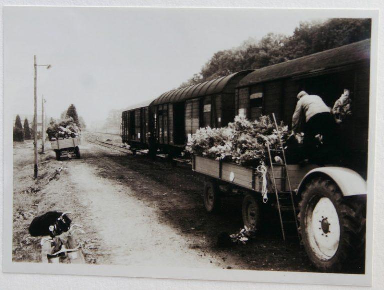 Anschlussgleis Hausbaumschule um 1958