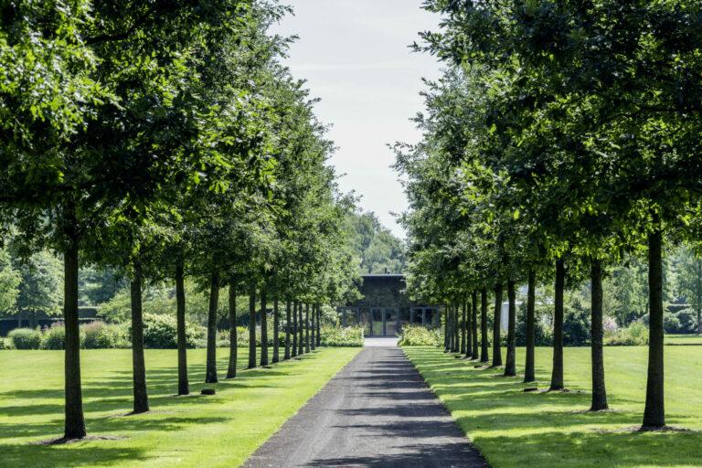 Quercus cerris Allee