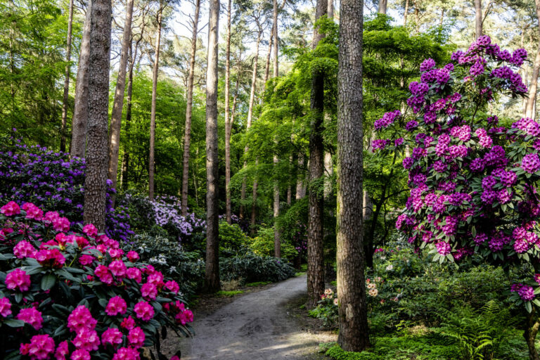 Rhododendronpark Gristede___