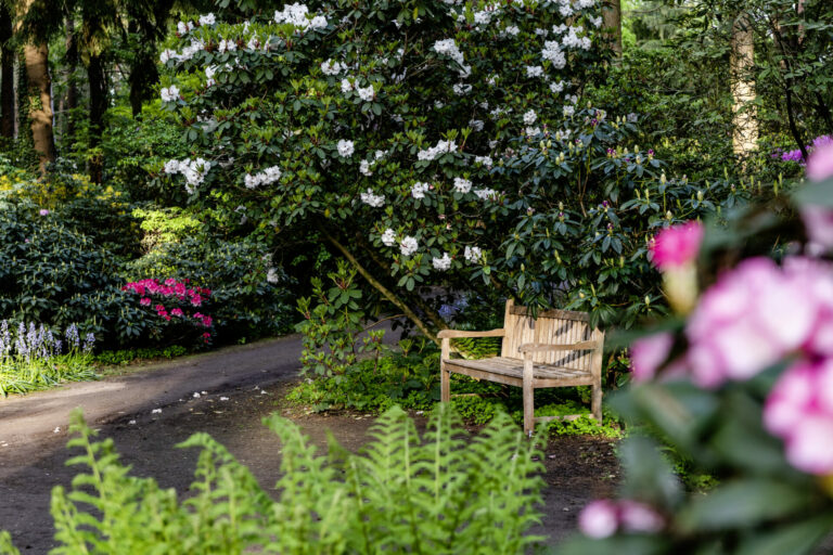 Rhododendronpark Gristede _